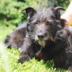 Шанель собака из приюта на пристройство Зов Предков zovpredkov.net фото 7