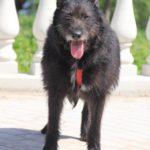 Шанель собака из приюта на пристройство Зов Предков zovpredkov.net фото 10