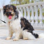 собака из приюта на пристройство zovpredkov.net фото5