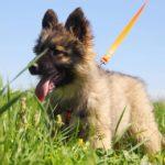 Гаврик щенок из приюта на пристройство zovpredkov.net фото2
