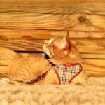Руби кот из приюта на пристройство zovpredkov.net фото12