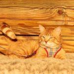Руби кот из приюта на пристройство zovpredkov.net фото10