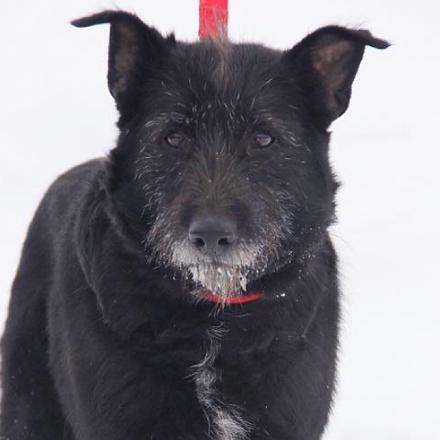Шанель собака из приюта на пристройство Зов Предков zovpredkov.net