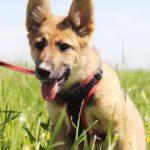 Линд щенок из приюта на пристройство zovpredkov.net фото1