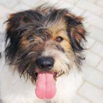 Барт собака из приюта на пристройство zovpredkov.net фото1