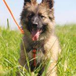 Гаврик щенок из приюта на пристройство zovpredkov.net фото4