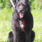 Шанель собака из приюта на пристройство Зов Предков zovpredkov.net фото 9