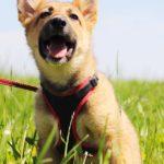 Линд щенок из приюта на пристройство zovpredkov.net фото4