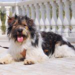 собака из приюта на пристройство zovpredkov.net фото4