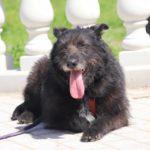 Шанель собака из приюта на пристройство Зов Предков zovpredkov.net фото 11
