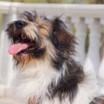 собака из приюта на пристройство zovpredkov.net фото7