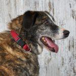 Сережа собака из приюта на пристройство zovpredkov.net фото3