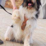 собака из приюта на пристройство zovpredkov.net фото8