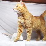Руби кот из приюта на пристройство zovpredkov.net фото7