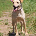 Мальта собака из приюта на пристройство zovpredkov.net фото 8