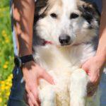 Зефирка собака из приюта на пристройство zovpredkov.net фото 3