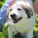 Зефирка собака из приюта на пристройство zovpredkov.net фото 1