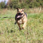Титан собака из приюта на пристройство частный приют для собак Зов Предков zovpredkov.net фото 22