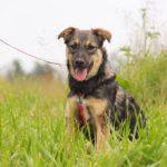 Молния собака из приюта на пристройство zovpredkov.net фото 2