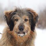 Глория собака из приюта Зов Предков фото 16