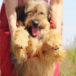 Глория собака из приюта Зов Предков фото 10