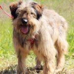 Глория собака из приюта Зов Предков фото 3