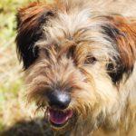 Глория собака из приюта Зов Предков фото 5