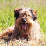 Глория собака из приюта Зов Предков фото 8