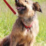Глория собака из приюта Зов Предков фото2