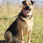 Титан собака из приюта на пристройство частный приют для собак Зов Предков zovpredkov.net фото 20