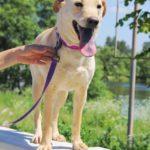 Мальта собака из приюта на пристройство zovpredkov.net фото 7