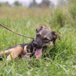 Молния собака из приюта на пристройство zovpredkov.net фото 6