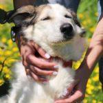 Зефирка собака из приюта на пристройство zovpredkov.net фото 6
