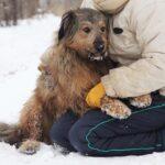 Глория собака из приюта Зов Предков фото 9