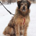 Глория собака из приюта Зов Предков фото 13