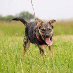 Молния собака из приюта на пристройство zovpredkov.net фото 3