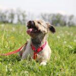 Чуня собака из приюта Зов Предков zovpredkov.net фото 18