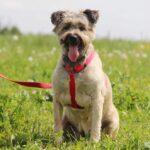 Чуня собака из приюта Зов Предков zovpredkov.net фото 14