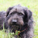 Цезарь собака из приюта на пристройство приют для бездомных животных Зов Предков zovpredkov.net фото 15
