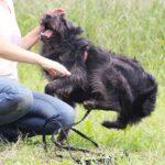 Цезарь собака из приюта на пристройство приют для бездомных животных Зов Предков zovpredkov.net фото 9
