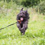 Цезарь собака из приюта на пристройство приют для бездомных животных Зов Предков zovpredkov.net фото 16