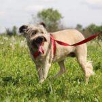 Чуня собака из приюта Зов Предков zovpredkov.net фото 13
