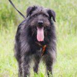 Цезарь собака из приюта на пристройство приют для бездомных животных Зов Предков zovpredkov.net фото 10