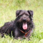 Цезарь собака из приюта на пристройство приют для бездомных животных Зов Предков zovpredkov.net фото 12