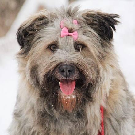 Чуня собака из приюта на пристройство, частный приют для бездомных животных zovpredkov.net