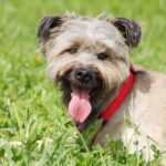 Чуня собака из приюта Зов Предков zovpredkov.net фото 17