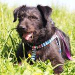 Цезарь собака из приюта на пристройство приют для бездомных животных Зов Предков zovpredkov.net фото 1