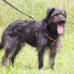 Цезарь собака из приюта на пристройство приют для бездомных животных Зов Предков zovpredkov.net фото 14