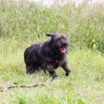 Цезарь собака из приюта на пристройство приют для бездомных животных Зов Предков zovpredkov.net фото 13