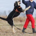 Адель собака из приюта на пристройство приют для бездомных животных Зов Предков zovpredkov.net фото 9